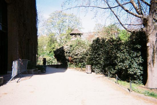 Vautour pape picture of menagerie du jardin des plantes - Menagerie du jardin des plantes paris ...