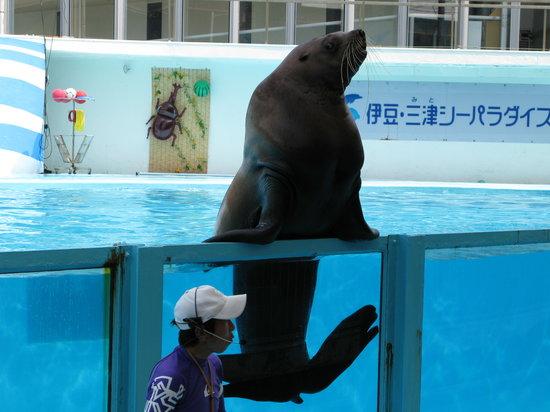 Izu Mito Sea Paradise: ショーの一場面