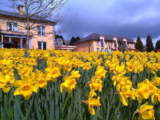 The Mustard Seed at Echo Lodge: Dance Daffodils!