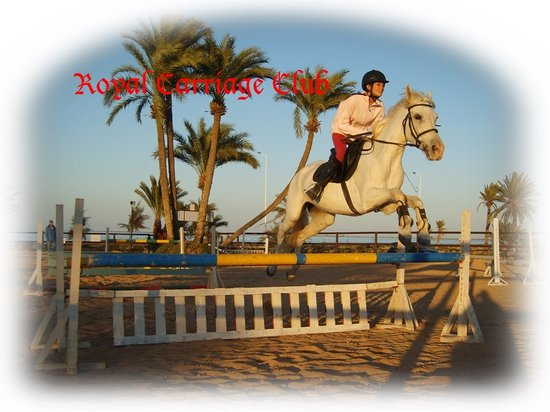 Royal Carriage Club Riding School: Lessons for all levels in our Open-air arena in front of the Flamingo Bay