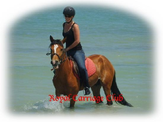 Royal Carriage Club Riding School: Discover Djerba on Horse-back