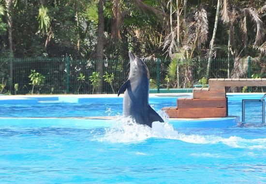 Dolphinaris Tulum: Dolphin Show