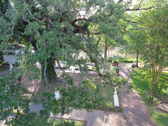 Old Castillo Bed & Breakfast: Evangeline Oak and Bayou Teche from the gallery