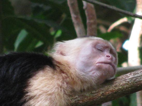 Arenas del Mar Beachfront and Rainforest Resort, Manuel Antonio, Costa Rica: another nap?