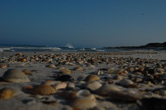 Port Saint Joe, FL: Shells on beach
