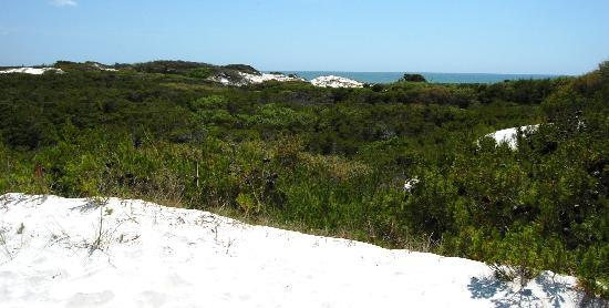 St. Joseph Peninsula State Park : View from atop the dunes