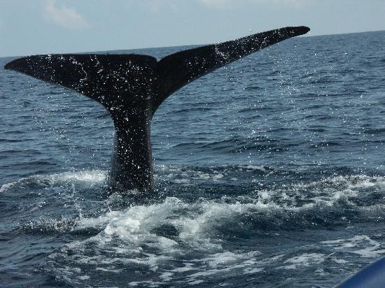 Trinco Blu by Cinnamon: ...whale-watching