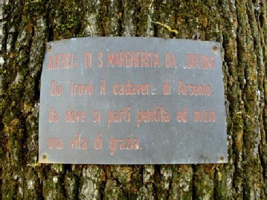 Quercia di Santa Margherita da Cortona: iscrizione
