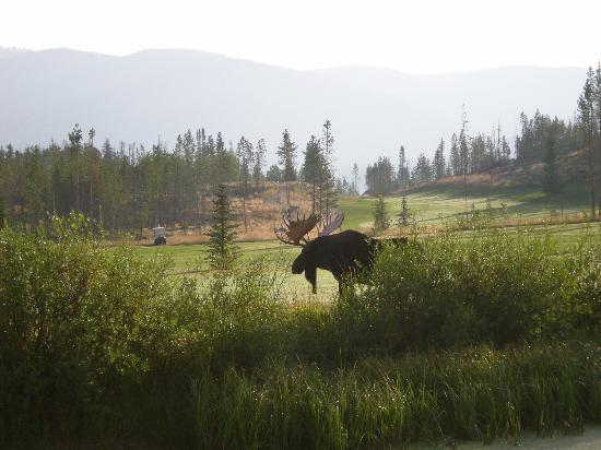 Grand Lake Golf Course: Moose on #18