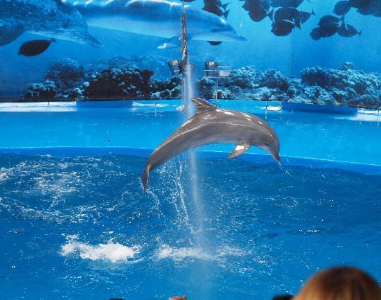 Picture From The Dolphin Show Barcelona Zoo Barcelona Tripadvisor