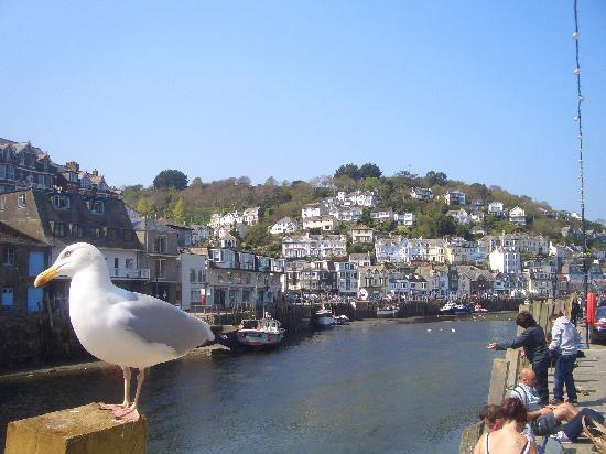 Lovely Looe - Picture of Parkdean - Looe Bay Holiday Park ...  Lovely Looe - P...