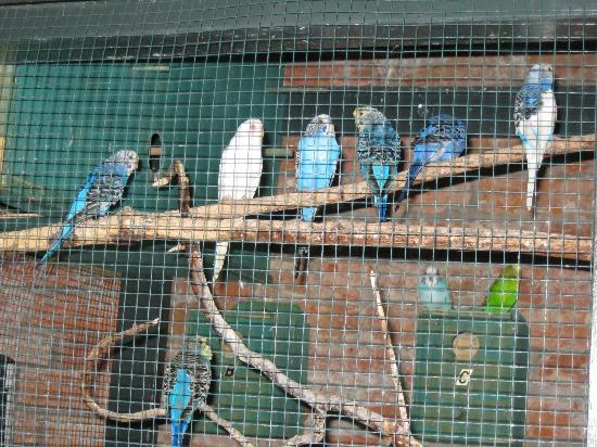 Bourgoyne Guest House: Parakeets in adjacent courtyard