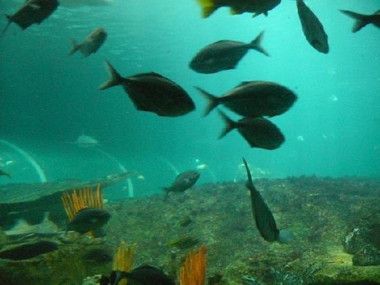 Sea Life Sydney Aquarium : Sydney Aquarium 3