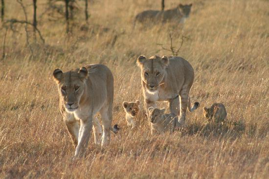 Porini Lion Camp: My favourite picture of my time in the Mara