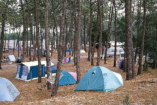 Parque de Campismo Orbitur S.Jacinto: Área Livre de campismo