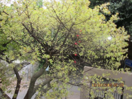 โฮเต็ล ไอคอน: A garden in the city