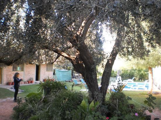 Cerro Del Valle Hotel Rustico: El Olivo y las plantitas de Miriam