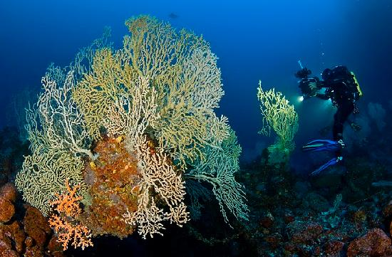 Costa Adeje, Spanien: Fondo marino Tenerife.