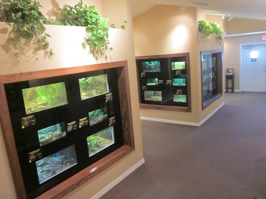Reptile Discovery Center: Snake exhibition area