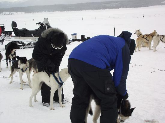 Dog Sledding in Summit County: Husband & Daughter Helping