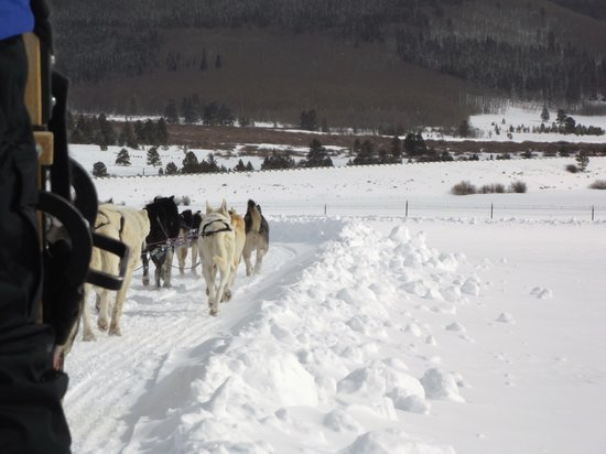 Dog Sledding in Summit County