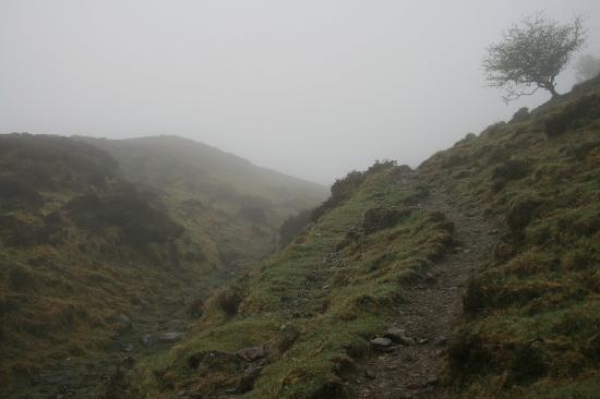Knocknarea: The trail is a sheep track - bring good shoes