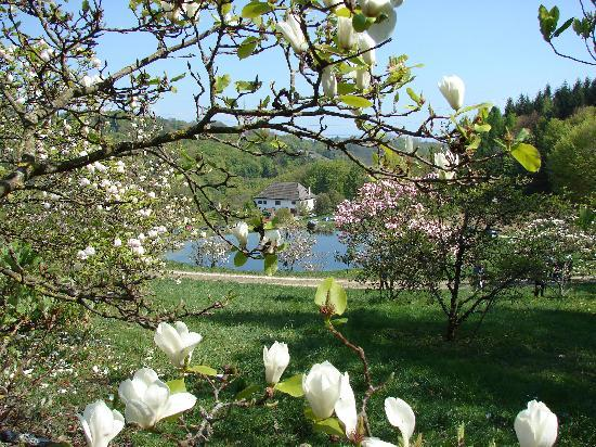 l'Arboretum National du Vallon de l'Aubonne: Magnolia and Cherry