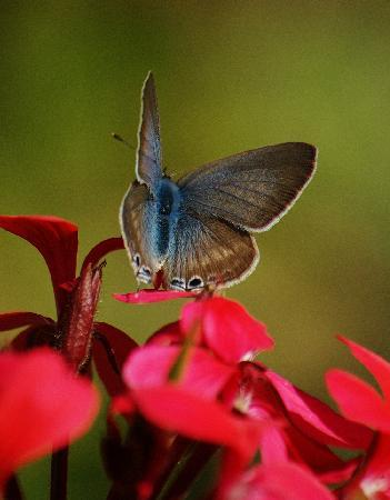 MAROC LODGE Atlas Mountains Boutique Hotel & Resort: Butterfly in the gardens