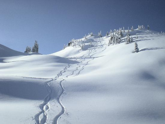 Great Northern Snowcat Skiing: Great Northern Tracks