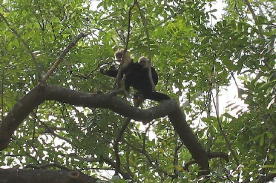 El Sol Verde Lodge & Campground: Monkeys!