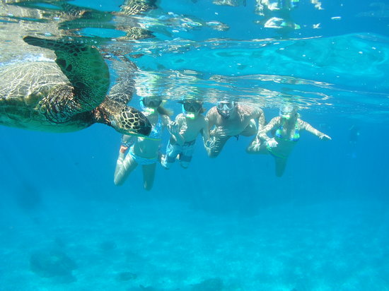 Hawaiian Paddle Sports : Turtle Snorkel Tours