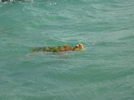 Grand Bahia Principe Tulum: rencontre avec les tortues de mer