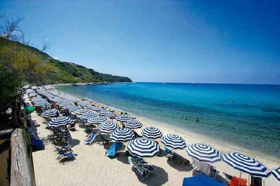 Ombrelloni Per La Spiaggia.Democrazia Oggi Aiuto Nella Spiaggia Senza Posidonia Fra