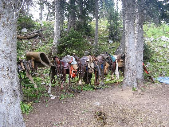 Bagley's Teton Mountain Ranch: Saddles on the rack