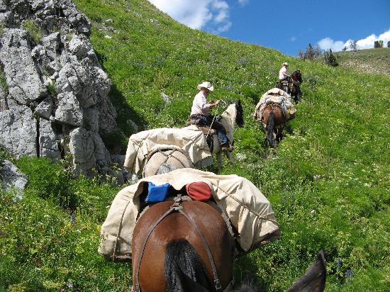 Bagley's Teton Mountain Ranch: Horses in deep brush