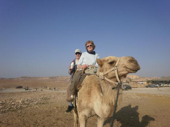 Arad, Israël : Camel Ride