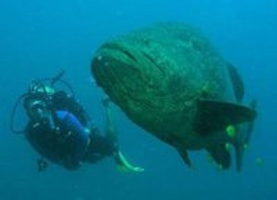 PEPE MURRIETA DIVING AT EL CANTIL IN CABO PULMO