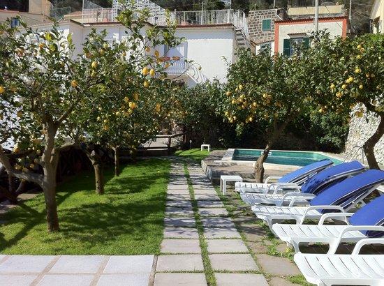 Casale Villarena: Lemon trees and pool.
