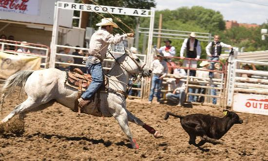Get along little doggie--action from the World's Oldest Rodeo in Prescott.