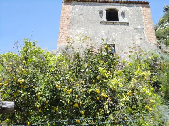Borgo San Rocco Resort : たわわに実ったレモン!