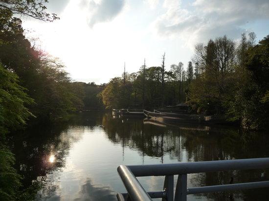 Inokashira Park : 静かな井の頭公園