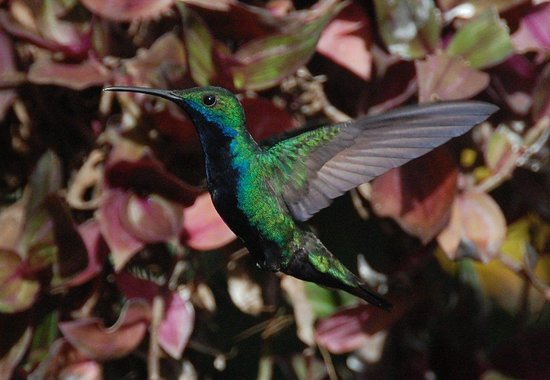 Turtle Beach by Rex Resorts: Humming bird at Adventure Farm