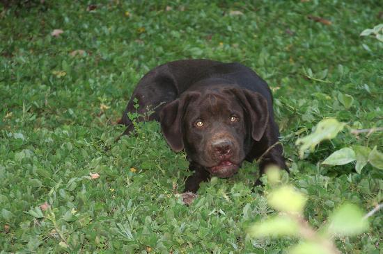 Los Altos de Eros: the adorable Coco