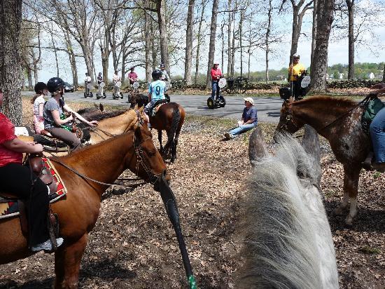 Hickory Hollow Horse Farm : gathered around...