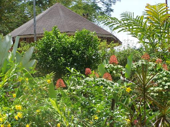 Jaco, Kosta Rika: Fantasy Flowers