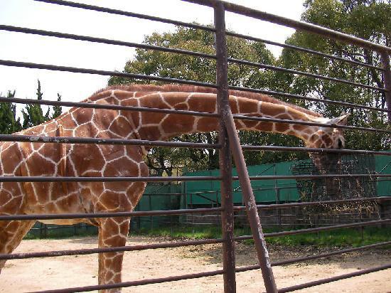 Himeji City Zoo: 姫路市立動物園3