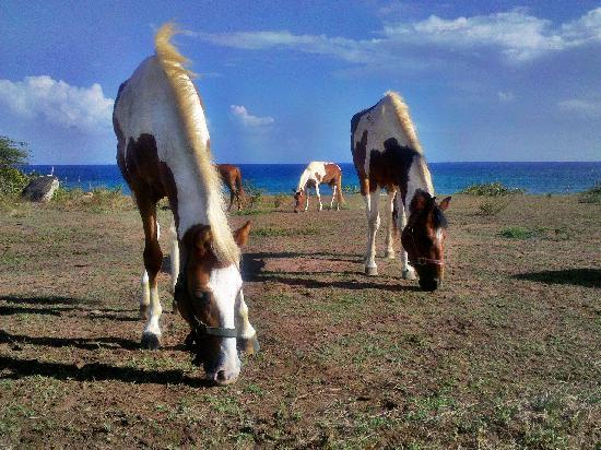 Hector's by the Sea: Horses at Hector's