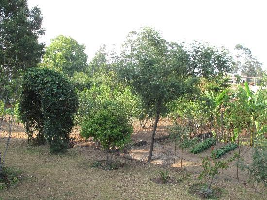 Cinnabar : The farm