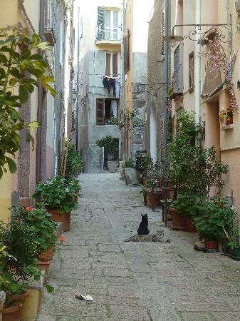 Castelsardo, Italië: Altstadt mit Katze