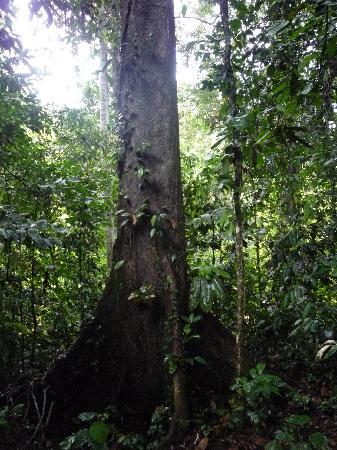 Danum Valley Conservation Area: Fauna